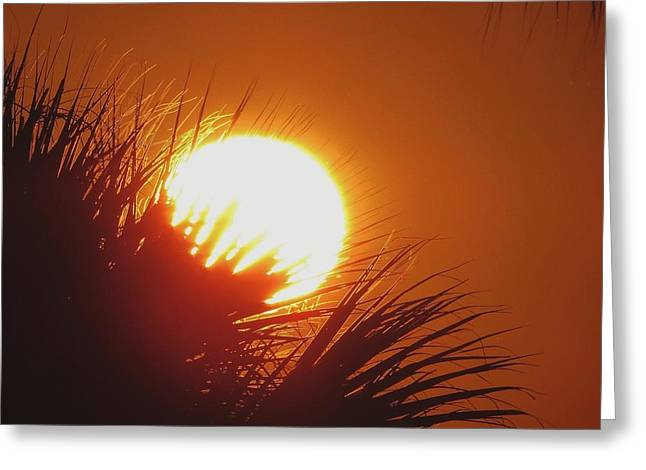 Greeting Card featuring the photograph Palm Sunday by Nikki McInnes