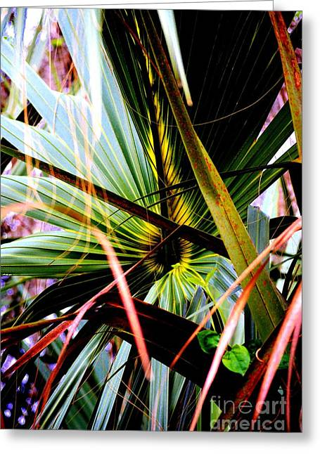 Palm Through The Fronds Greeting Card
