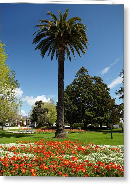 Palm Tree And Flower Gardens, Seymour Greeting Card by David Wall