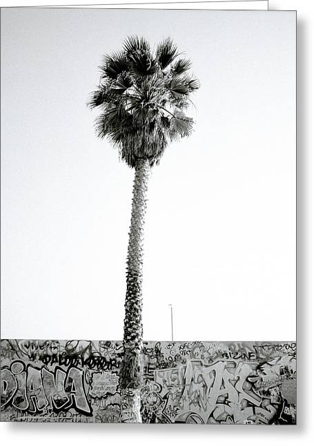 Palm Tree And Graffiti Greeting Card