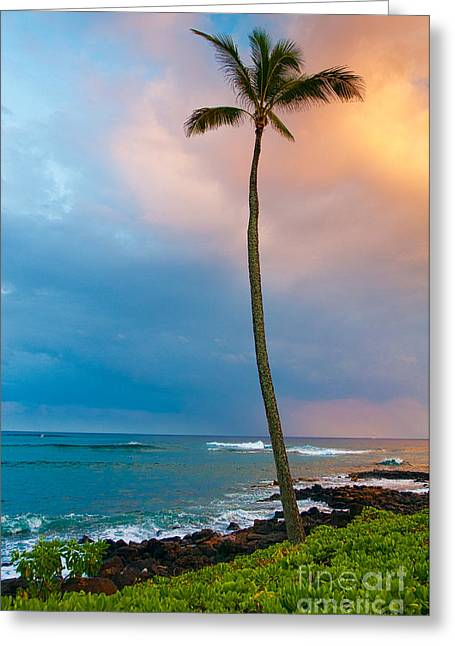 Palm Tree At Sunset. Greeting Card