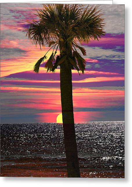 Palm Tree At Sunset Greeting Card