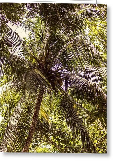 Palm Tree Breeze Greeting Card