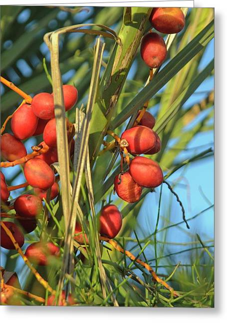 Palm Tree Dates Greeting Card by Photostock-israel
