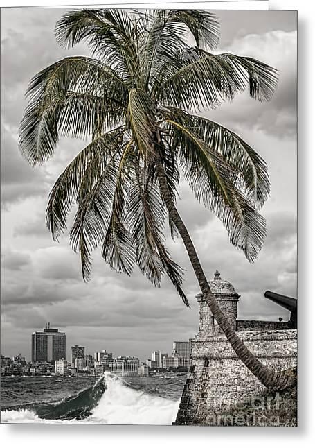 Palm Tree In Havana Bay Greeting Card