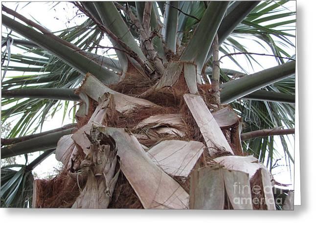 Florida Palm Greeting Card