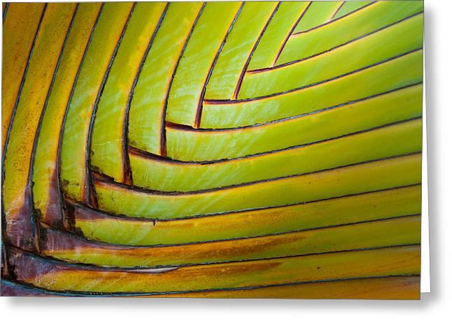 Palm Tree Leafs Greeting Card by Sebastian Musial