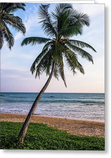 Palm Tree, Mirissa Beach, South Coast Greeting Card by Matthew Williams-ellis