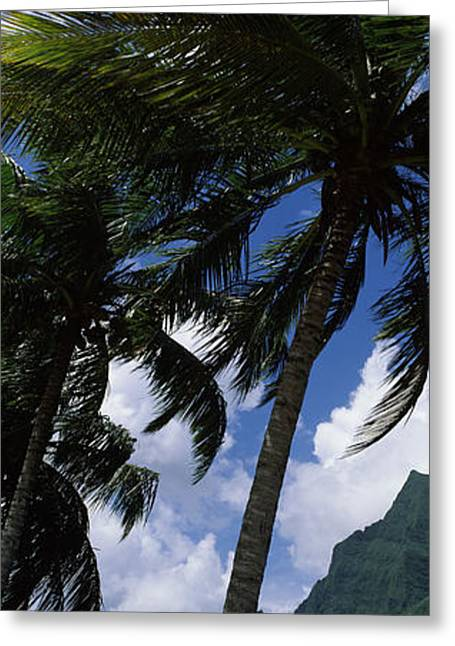 Palm Tree On Cooks Bay With Mt Mouaroa Greeting Card