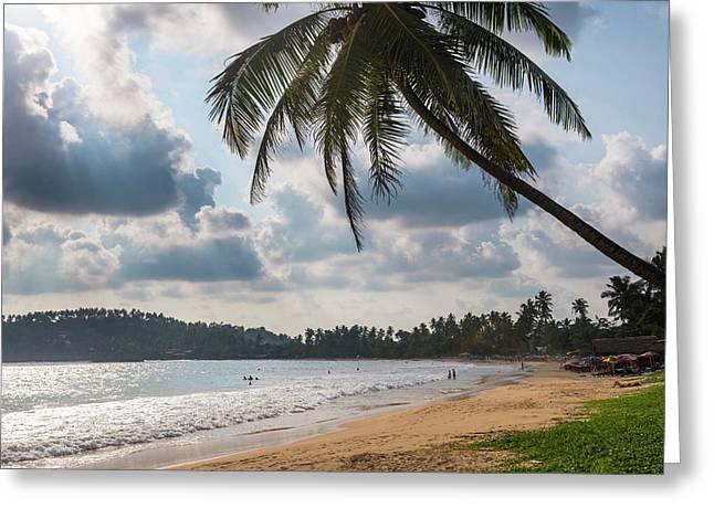 Palm Tree On Mirissa Beach At Sunset Greeting Card by Matthew Williams-ellis