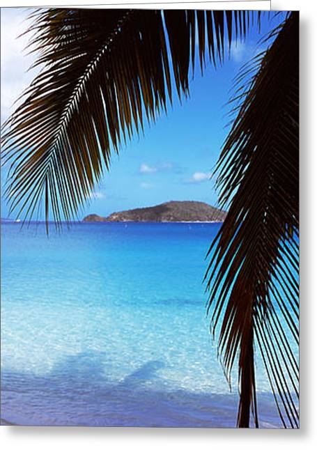 Palm Tree On The Beach, Maho Bay Greeting Card