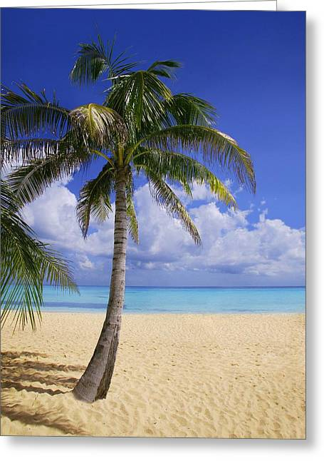 Palm Tree On Tropical Beach Greeting Card