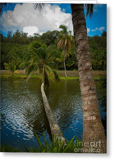 Palm Tree Over River Greeting Card