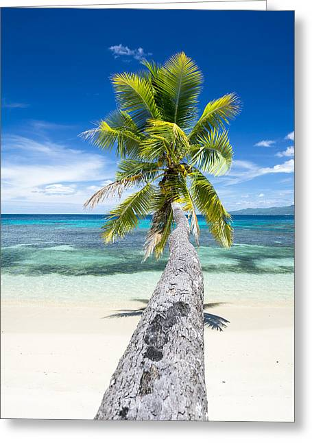 Palm Tree Over Water Greeting Card