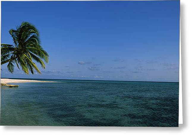 Palm Tree Overhanging On The Beach Greeting Card by Panoramic Images