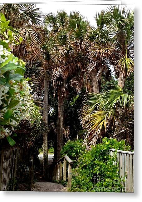 Palm Tree Path Greeting Card