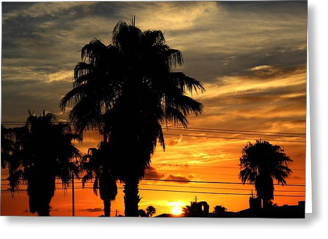 Greeting Card featuring the photograph Palm Tree Silhouette by Candice Trimble