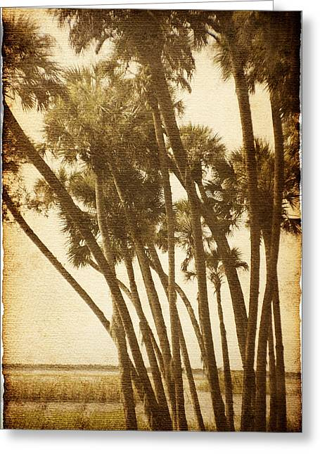 Palm Trees Along The River Greeting Card by Skip Nall