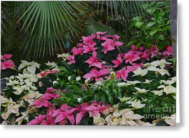 Palm Trees And Flowers Greeting Card by Kathleen Struckle