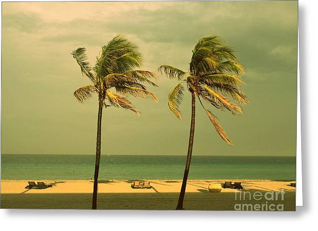 Palm Trees At Hallendale Beach Greeting Card