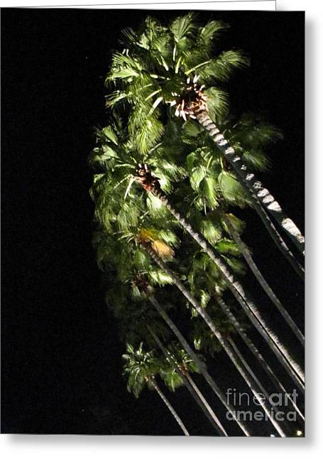 Palm Trees At Night Greeting Card by Gayle Melges