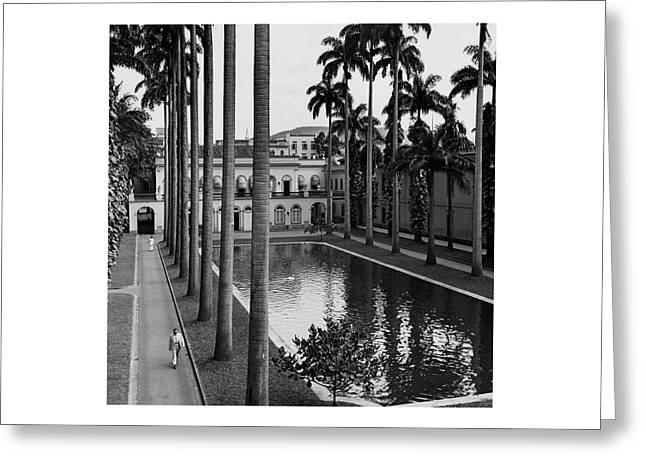 Palm Trees Bordering A Pool Greeting Card