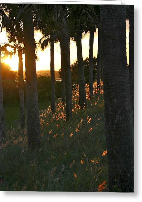 Palm Trees In Silhouette Greeting Card