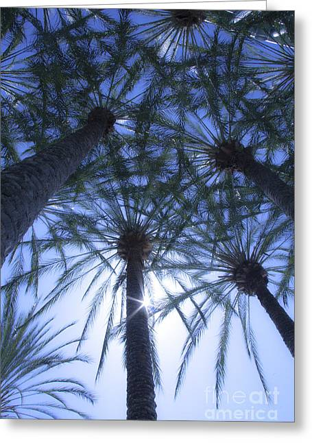Greeting Card featuring the photograph Palm Trees In The Sun by Jerry Cowart
