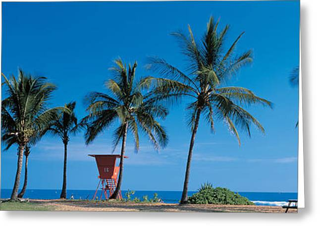 Palm Trees Oahu Hi Usa Greeting Card by Panoramic Images