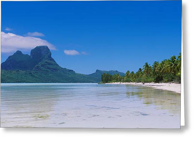 Palm Trees On The Beach, Bora Bora Greeting Card by Panoramic Images