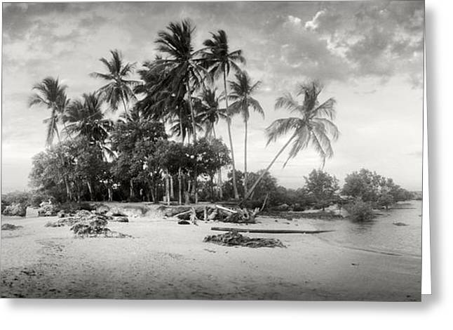 Palm Trees On The Beach, Morro De Sao Greeting Card