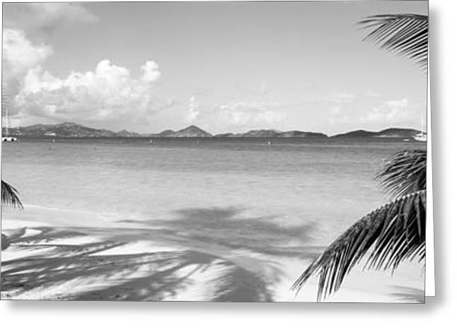 Palm Trees On The Beach, Us Virgin Greeting Card by Panoramic Images