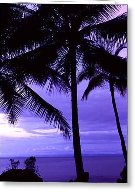 Palm Trees On The Coast, Colombia Greeting Card by Panoramic Images