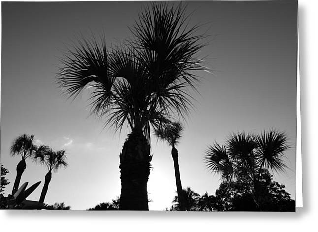 Palm Trees Reach For The Sky Greeting Card