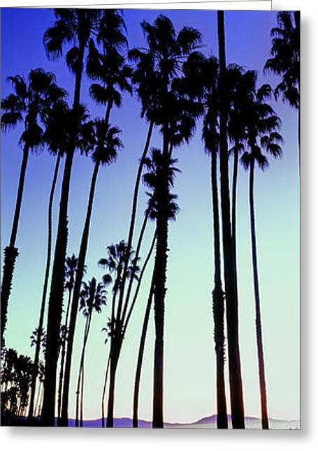 Palm Trees Silhouette At Sunrise, Santa Greeting Card by Panoramic Images