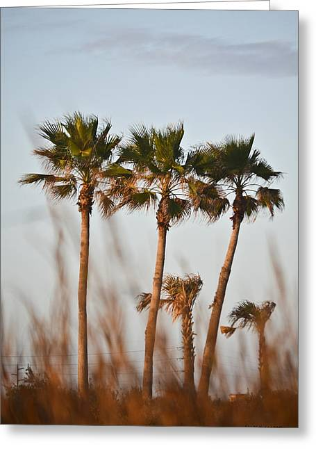 Palm Trees Through Tall Grass Greeting Card