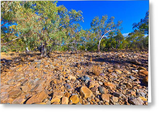 Palm Valley Central Australia Outback  Greeting Card by Bill  Robinson