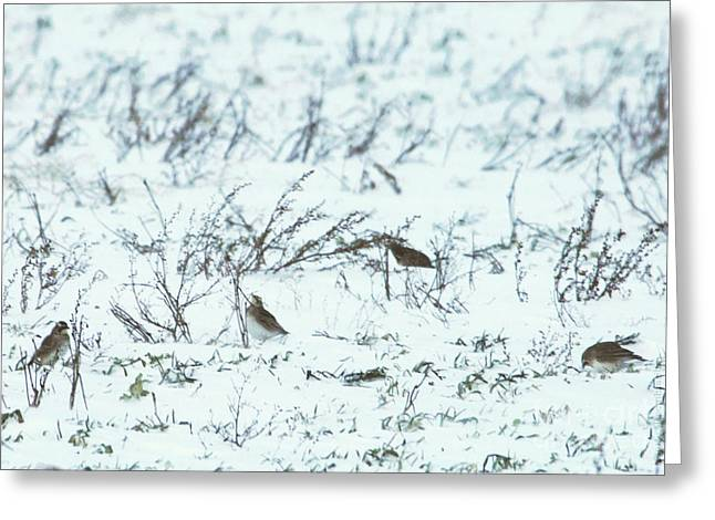 Palm Warbler's Striving In Squall At Below Freezing Temperature Greeting Card