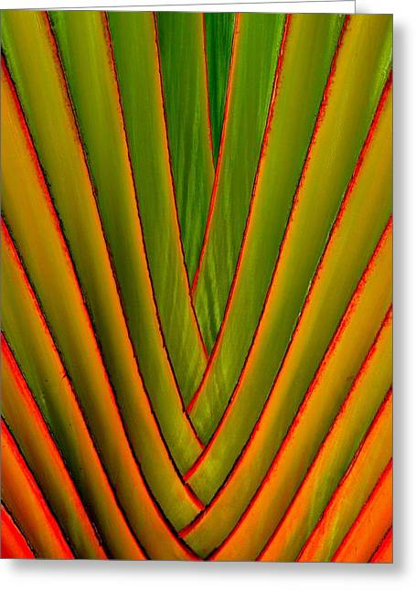 Palm Weave Fine Greeting Card