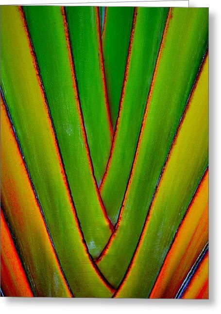 Palm Weave Grande Greeting Card