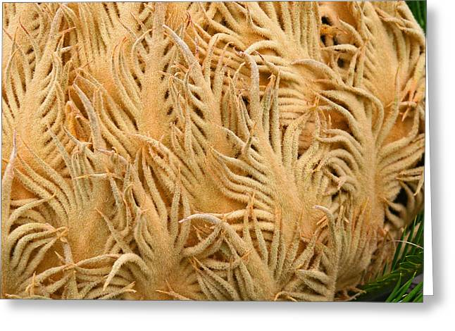 Palme Cycas Square Greeting Card by Karen Adams
