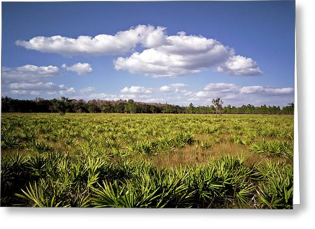 Palmetto Field. Three Lakes W.m.a. Greeting Card