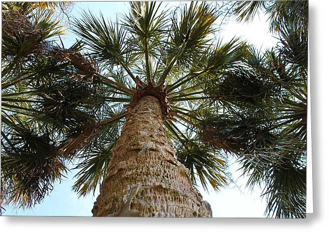 Palms Above Greeting Card