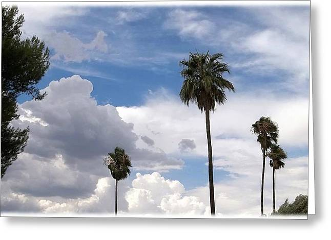 Palms And Clouds Greeting Card
