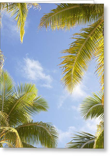 Palms And Sky Greeting Card by Brandon Tabiolo