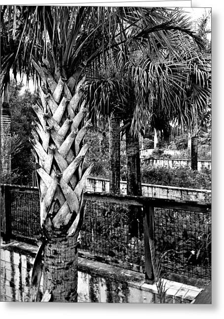 Palms And Walls In Black And White Greeting Card