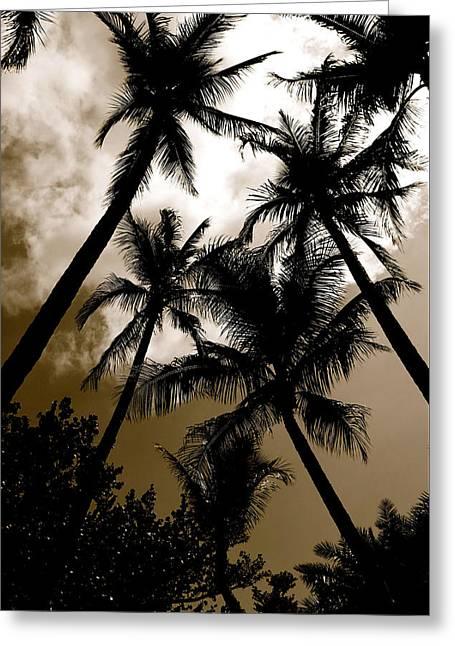 Palms Greeting Card by AR Annahita