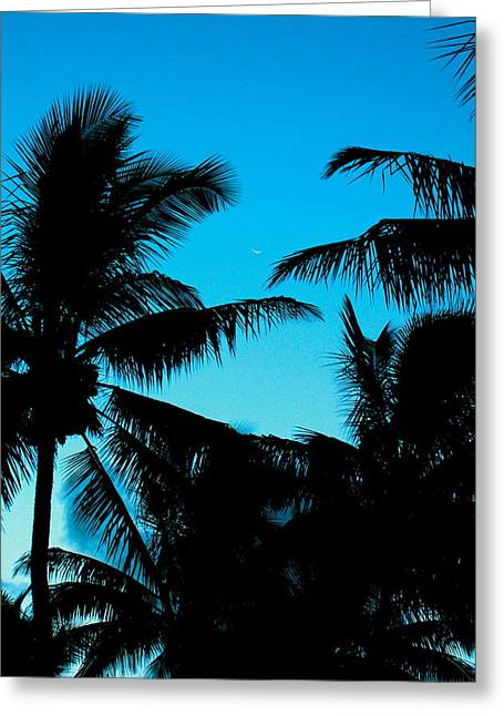 Palms At Dusk With Sliver Of Moon Greeting Card by Lehua Pekelo-Stearns