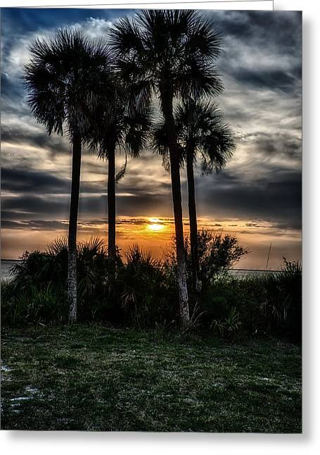 Palms At Sunet Greeting Card