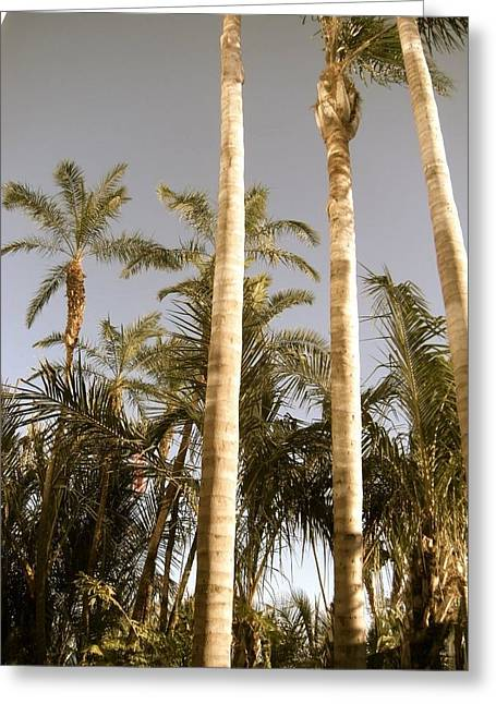 Palms Greeting Card by Brynn Ditsche